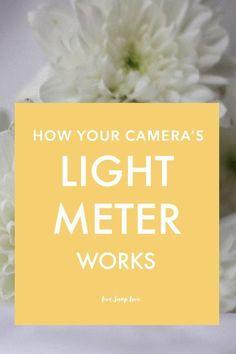 Photography Tips | Get accurate exposure by understanding how your camera's light meter works. Click through to read this photography tutorial for beginners!