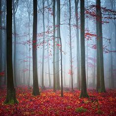 Misty Wood by Carsten Meyerdierks on 500px