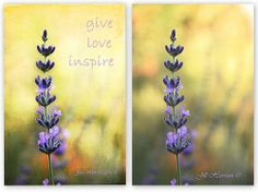 Mosaic-Lavender