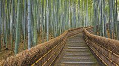 Kyoto, Japan - Bamboo Path