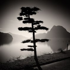 Pierre Pellegrini, Lugano My City I Photography Essentials, City Photography, Black And White City, Black And White Pictures, Tree Forest, Chiaroscuro, Weird World, Belle Photo, Black And White Photography