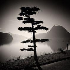 Pierre Pellegrini, Lugano My City I Photography Essentials, City Photography, Fine Art Photography, Black And White City, Black And White Pictures, Tree Forest, Chiaroscuro, Weird World, Belle Photo