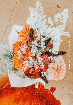 ☆ dm for pic credit ☆ Amazing Flowers, Pretty Flowers, Wall Collage, Canvas Wall Art, Cactus, No Rain No Flowers, Flower Aesthetic, Aesthetic Collage, Cute Patterns Wallpaper