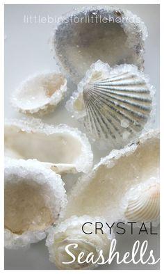 Crystal seashells science ocean beach activity
