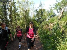 FITFARMS SOMERSET TALL TREES WALK EXERCISE  This is one of the best walks in Somerset where the FitFarms guest go up to a set of trees called tall trees.   The trees are the tallest in the country and the view at the top is outstanding.  The weight loss retreat guest walk approx 7 miles and are then picked up by a FitFarms mini bus and taken back to the retreat.