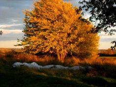 DSCN3836 by Kathy Mereand, via Flickr