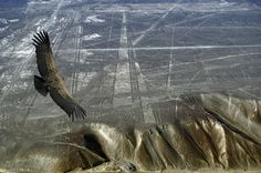 The Nazca Lines are a series of ancient geoglyphs located in the Nazca Desert in southern Peru. Scholars believe the Nazca Lines were created by the Nazca culture between 400 and 650 AD based on shards of pottery and other artifacts found in the area. Nazca Lines Peru, Nazca Peru, Machu Picchu, Lac Titicaca, Creepy, Unexplained Phenomena, Inca, Fresco, Ancient Aliens