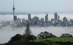 Public Life Survey - Auckland