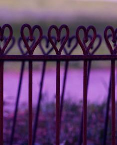 Heart Photography, Purple Hearts, Garden, Wrought Iron, Cast Iron Hearts, Landscape photography, 5 x 7 Photograph, FPOE