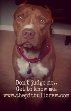 I'm Yogi and I'm the majority. I'm a pit bull dog. I'm friendly, happy, loyal, and loving. I'm everything the media rarely reports. Don't judge a book by its cover. Get to know me and you'll love me. (ps. My ears were already cropped when I joined the Pit Bull Crew) #endbsl #dontjudgeme #loveme #imadog — with Jonathan XD Vargas Cruz and Ch Kadzz.