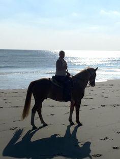 {Tranqulity is a beach state of mind} ~ unknown #inletpoint #inletpointplantation #waitesisland  #beachrides  #northmyrtlebeach  #horses  ~ Inlet Point Plantation Stables, North Myrtle Beach SC