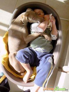 big dogs and little kids (6)   http://www.dumpaday.com/