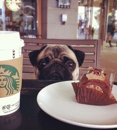 Pug. John says I look like this when he doesn't give me chocolate when I ask for it.