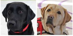 Two dogs are making a difference for the homeless!
