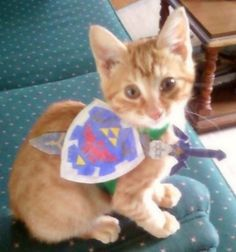 Legend of Zelda cat. Maybe the only dressing up of a cat my husband would let me do...