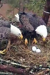 Berry College Nest Cam #2   JANUARY 2015