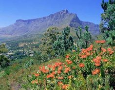 Table Mountain seen from Signal Hill, Cape Town, Western Cape province, South Africa photo Signal Hill Cape Town, South Afrika, Table Mountain, Around The Worlds, Mountains, Places, Nature, Travel, African