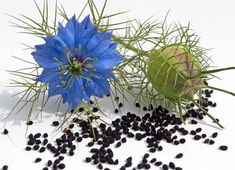Learn how to make your own black seed oil using a presser machine. Kalonji Seeds, Cadeau Bio, Nigella Sativa Oil, Parasite Cleanse, Nigella Seeds, Hair Remedies For Growth, Crude Oil, Black Seed, Oil Benefits
