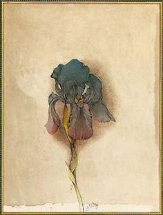 """Bruno Bruni:  Bild """"Iris germanica"""", 1985...... My next tattoo is going to be an iris!!!"""
