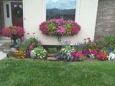Colorful summer. State Fair Zinnia, supertunias, salvia, petunia, zinnia, marigolds, lantana, dusty Miller, sweet potato vine. 2015