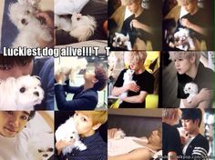 Coco   allkpop Meme Center I'm jealous of got7 rather that the dog, it's so fluffy and small, I want one! But I already got my toy poddle