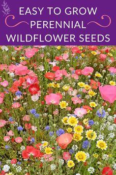 Cottage Garden Plants, Garden Bulbs, Garden Shrubs, Garden Candles, Cut Flower Garden, Beautiful Flowers Garden, Flower Garden Layouts, Cut Garden, Flower Garden Design