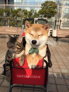 ペットカート初体験のわんことにゃんこ(^^♪お利口さんな表情がたまらない♡♡♡ | mofmo