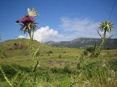 Munonne | Kirsten Slots | Yoga og Mindfulnessferie på Lesbos | uge 25, 27 og 34 2013 - Munonne