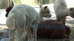 Reportage - De dieren in Hoenderdaell kregen vandaag ijsjes tegen de hittte