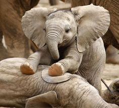 china ober-se le plus grand reserva de elefants de le munde