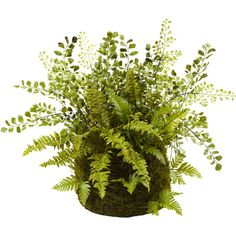Tuck this verdant faux fern arrangement into a shimmering silver planter for a pop of contrast, or set it atop the mantel on its own to bring a touch of the ...