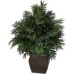 43 inch Triple Bamboo Palm in Decorative Planter ❤ liked on Polyvore