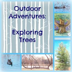 Take the kids on an Outdoor Adventure -- learn about trees and the animals that need them!   #weteach