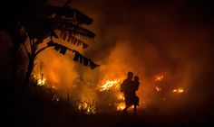 Forests blaze in south-east Asia The annual toxic mix of seasonally dry conditions, slash and burn forest clearance for plantation development (including palm oil plantations), and highly flammable peat soils were exacerbated this year by the El Nino effect, resulting in fatal forest fires that began in July and continued for several months.