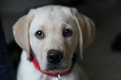 Puppy Creamy