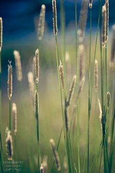 mountain meadow in July