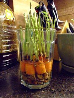 Bir Kere Satın Alıp Sonsuza Kadar Yiyeceğiniz 10 Sebze