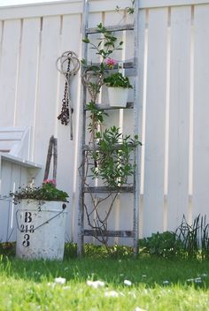Recycled ladder in the garden.