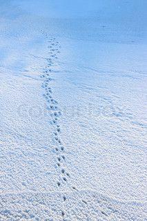 Tyresö, Sweden, 19th January, 2013, Winter landscape on a sunny winter day
