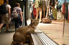 A cat i met in Istanbul: He told me he was relaxing in the shop fronts air con because of the ridiculous summer heat   cats funny pictures