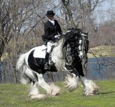 The Gypsy Vanner is a horse that originates from the UK and Ireland. Members of the breed come in a variety of colors but predominantly are of piebald coloring and have many draft characteristics, including heavy bone and abundant feathering on the lower legs. There is no exact known history of the Gypsy. It is believed by some that the Gypsy Vanners are descended from a combination of Shires, Clydesdales, Friesians, and Dales Ponies with their origins in the Romani gypsy community of the…