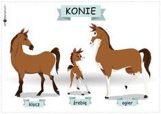Rodziny zwierząt – konie - Printoteka.pl Charles Darwin, Moose Art, Crafts For Kids, Preschool, Education, Speech Language Therapy, Animales, Poster, Crafts For Children