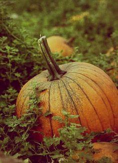 Sweetly autumn