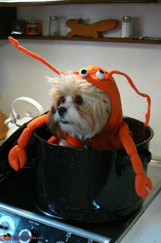 I think I know a little dog that needs this lobster costume. In fact, I may know several. Actually, does it come in large? All dogs should have this costume. #JoesCrabShack