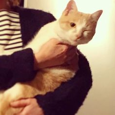 ウインク♡ #アントニオ #茶トラ白 #猫 #愛猫 #保護猫 #cat #ilovecat #ニャンスタグラム #ニャンダフルライフ