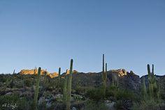 Good Morning Sunshine ~ Cacti, Santa Catalina Mountains at Sunrise