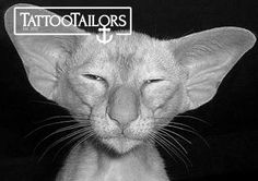 Buy yourself custom tattoo designs at www.tattootailors.com Tumblr Feed, Custom Tattoo, Tattoo Blog, What Goes On, Beautiful Cats, Funny Faces, Tattoo Designs, Hilarious, Kitty
