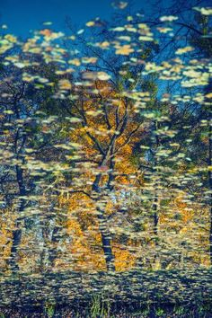 "Saatchi Art Artist igor vitomirov; Photography, ""Reflection"" #art"