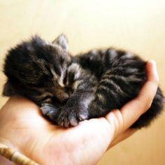 Handful of kitty...