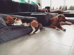 Toca películas de domingo #perros #guarderiacanina #alojamiento #residenciasinjaulas